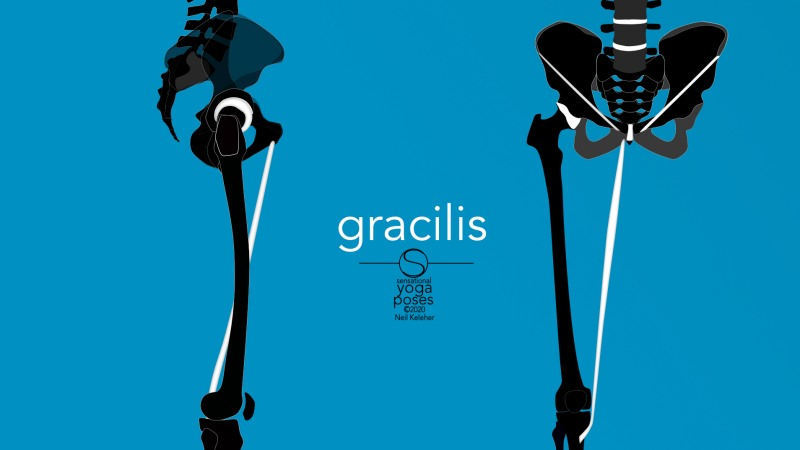Gracilis, front and side view. Neil Keleher, Sensational Yoga Poses.