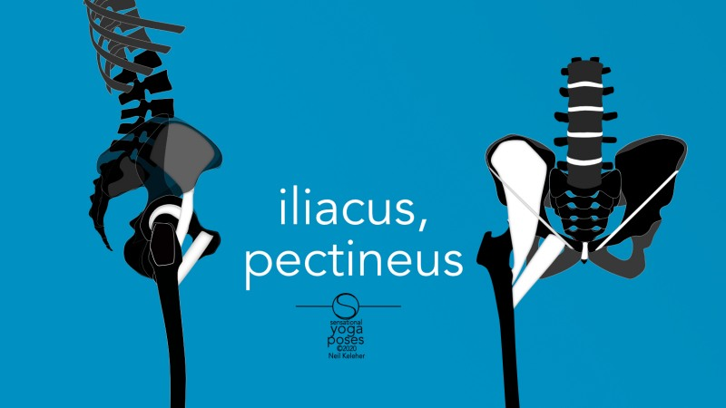 iliacus and pectineus front and side view. Neil Keleher, Sensational Yoga Poses.