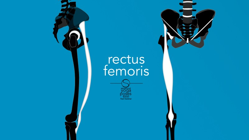Rectus femoris front and side view. Neil Keleher, Sensational Yoga Poses.