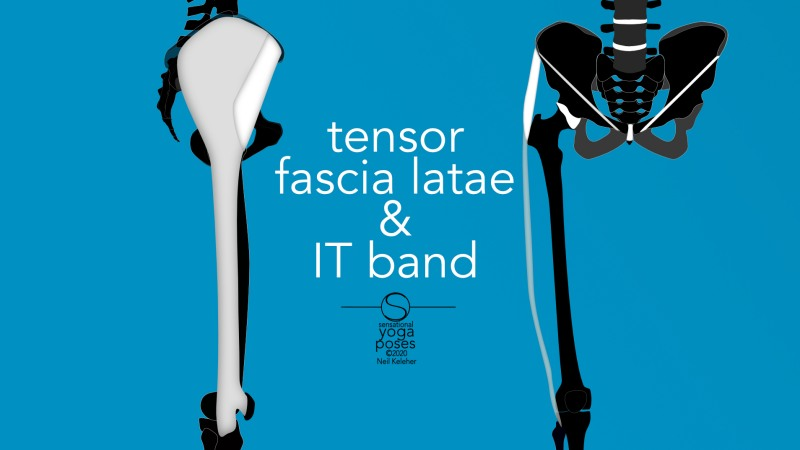 Tensor fascia latae and IT band, front and side view. Neil Keleher, Sensational Yoga Poses.