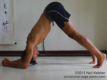 dolphin yoga pose with hands clasped and heels lifted, headstand preparation exercise for shoulders and arms