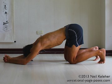 dolphin yoga pose with hands clasped and knees on the floor, headstand preparation exercise for shoulders and arms