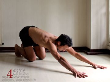 Prone Yoga Poses, on all fours, pushing hips rearwards, Neil Keleher, Sensational Yoga Poses