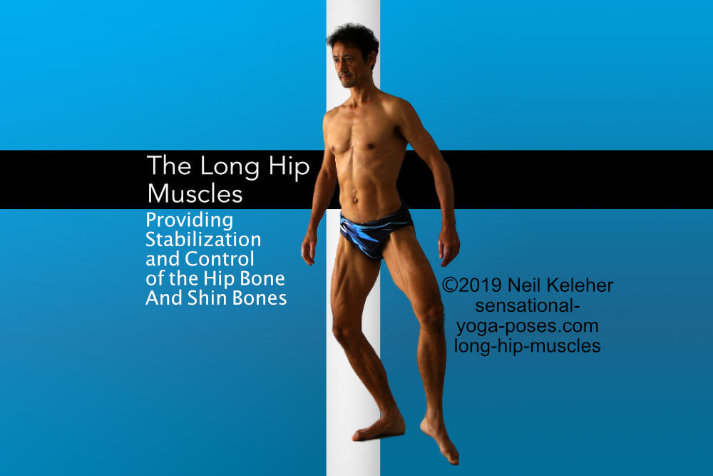 The long hip muscles by Neil Keleher. Sensational Yoga Poses.