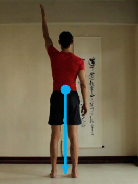 location of center of gravity, body straight and upright