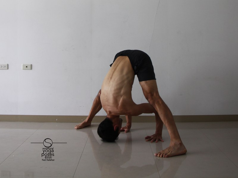 Prasaritta padotanasana A, wide leg standing forward bend with hands on floor and elbows bent. Neil Keleher, Sensational Yoga Poses.