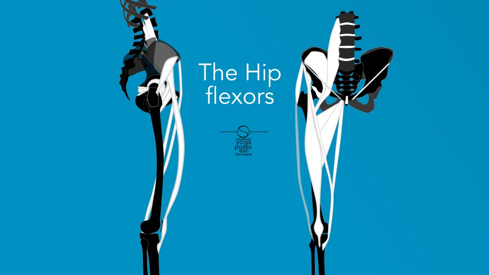 The better you understand your hip flexors the easier it is to stretch them, strengthen them, remedy problems and otherwise use them. Neil Keleher, Sensational Yoga Poses.
