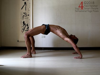 Back bending yoga poses: Wheel pose with spine actively bent backwards using spinal erectors. Glutes are activated to bend hips backwards. Neil Keleher. Sensational Yoga Poses.